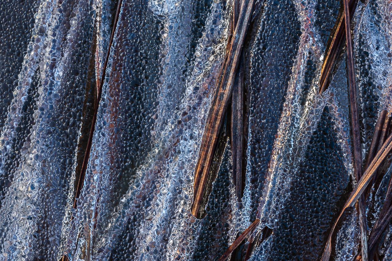 L'hiver Haut-Jurassien nous permet d'admirer de fort belles compositions naturelles émouvantes, très graphiques, principalement dues au froid intense qui fige l'eau des lacs et mares, emprisonnant bulles d'air, végétaux, graines et insectes.