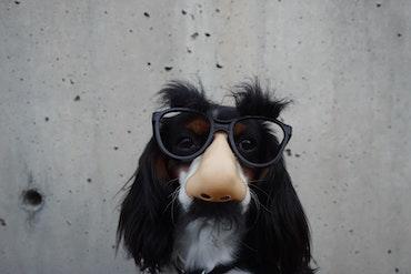 Dog wearing disguise