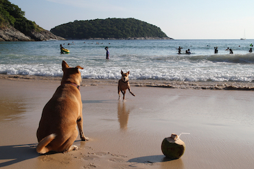 Dog watching another dog on the beach