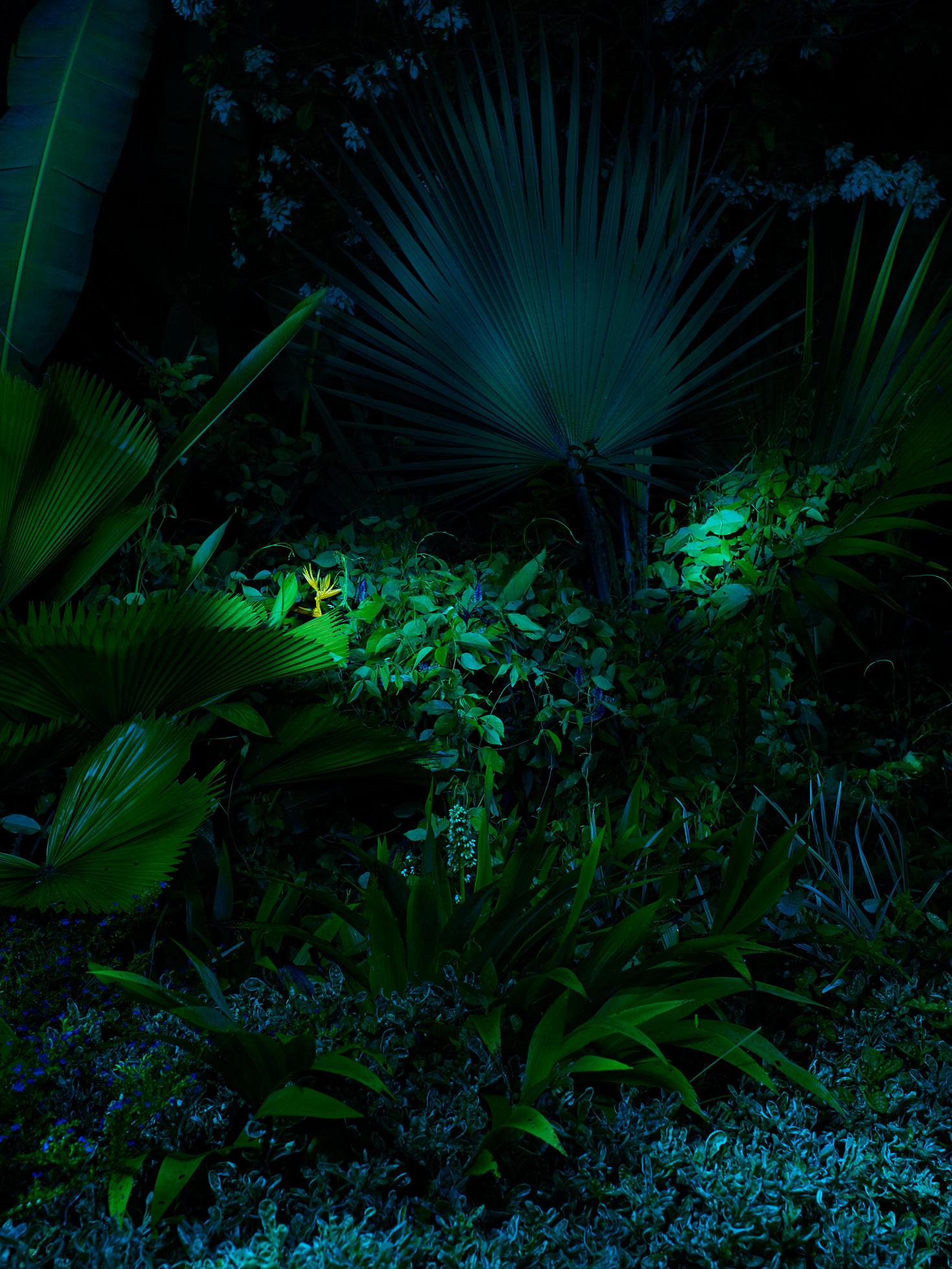 Jungle Plants by Geert de Taeye