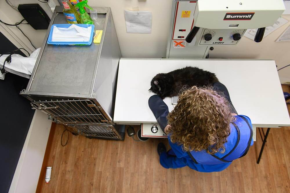 Staff member holding patient at clinic for x-rays