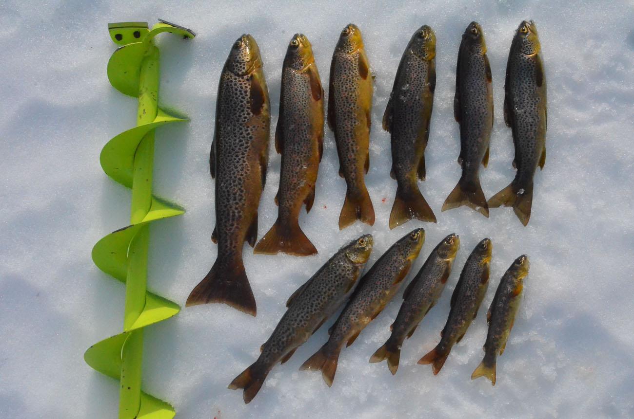 Isfiske med Guide Gunnar - 005