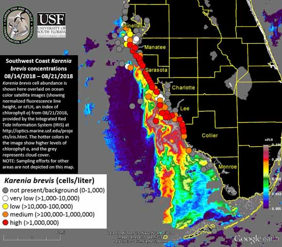 Map of where red tide is located along the coast of Florida