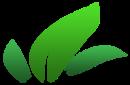 Asset details   leafs decorative