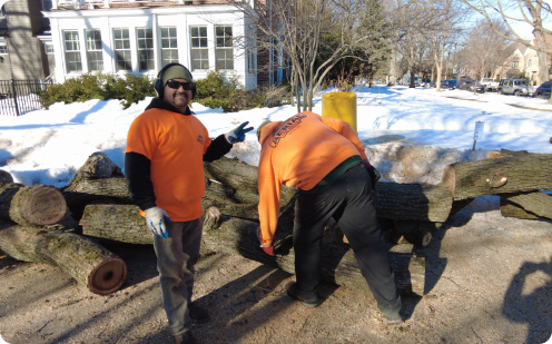 Tree Removal Lake Forest