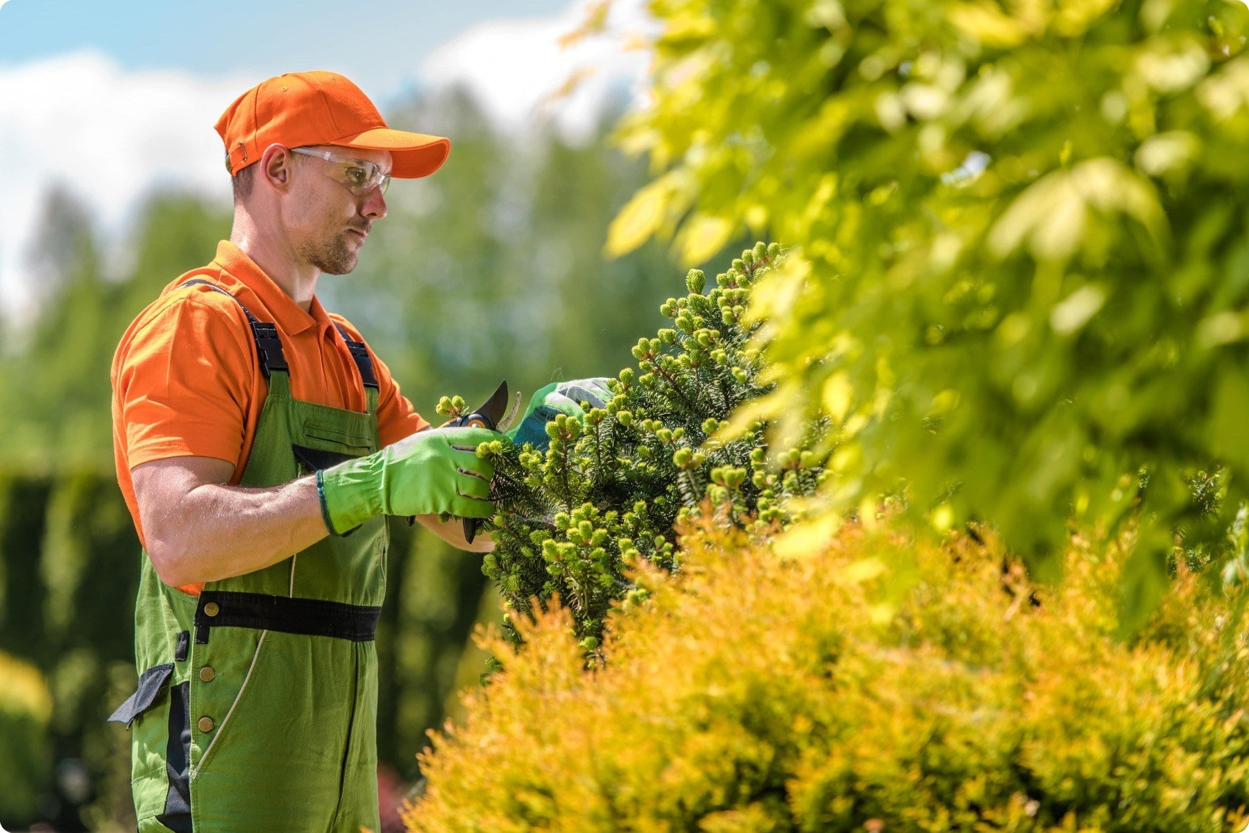 Tree Service Lake Forest