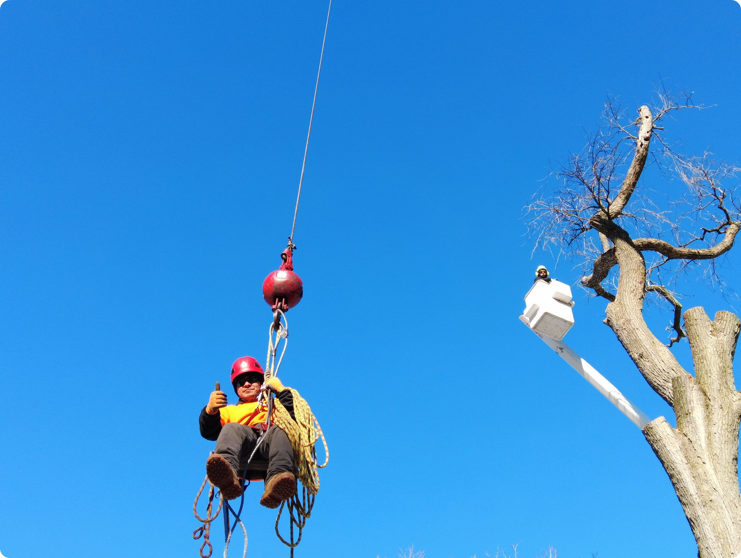 Aerial Tree Service About