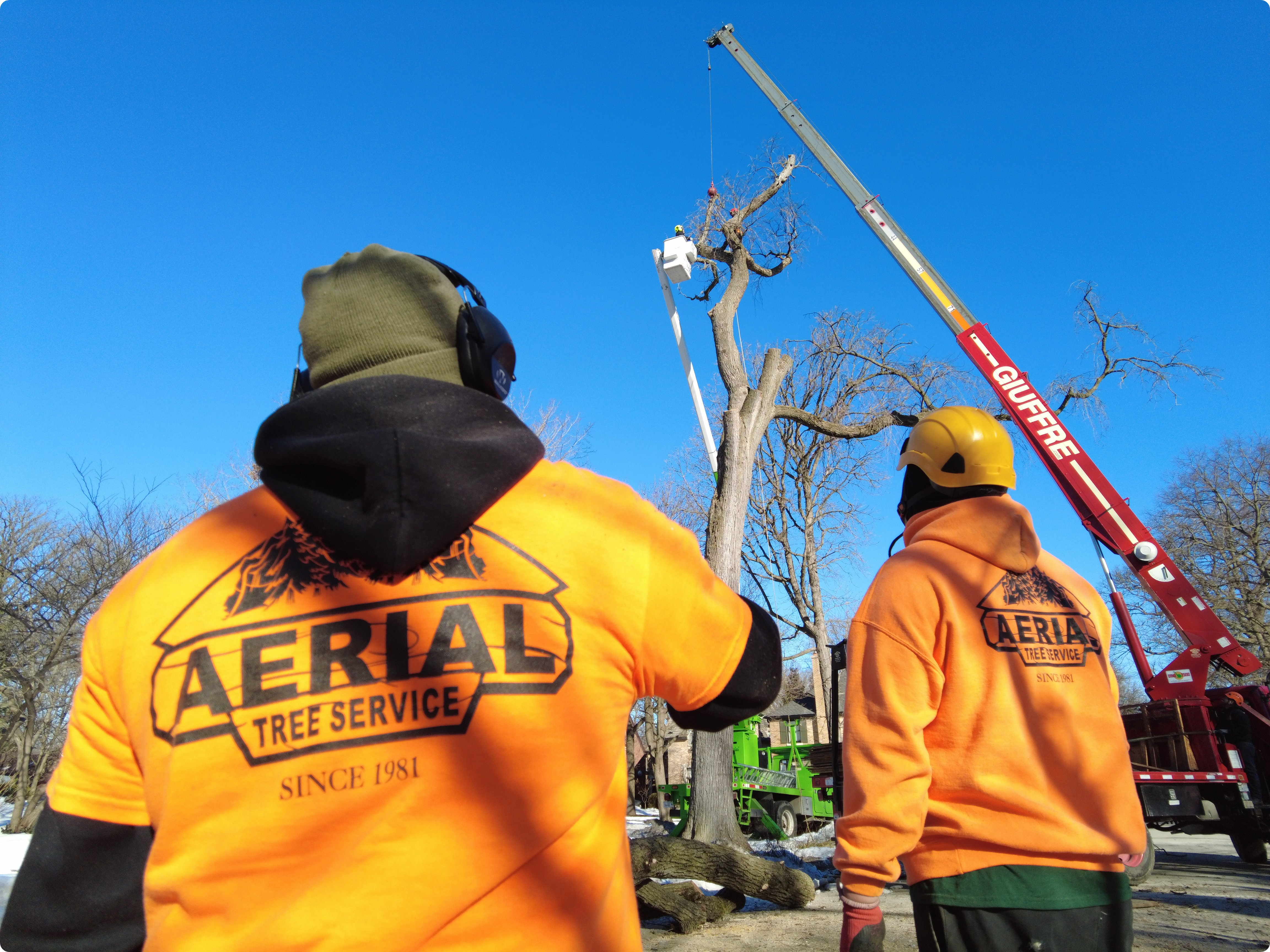 Tree Removal Glenview