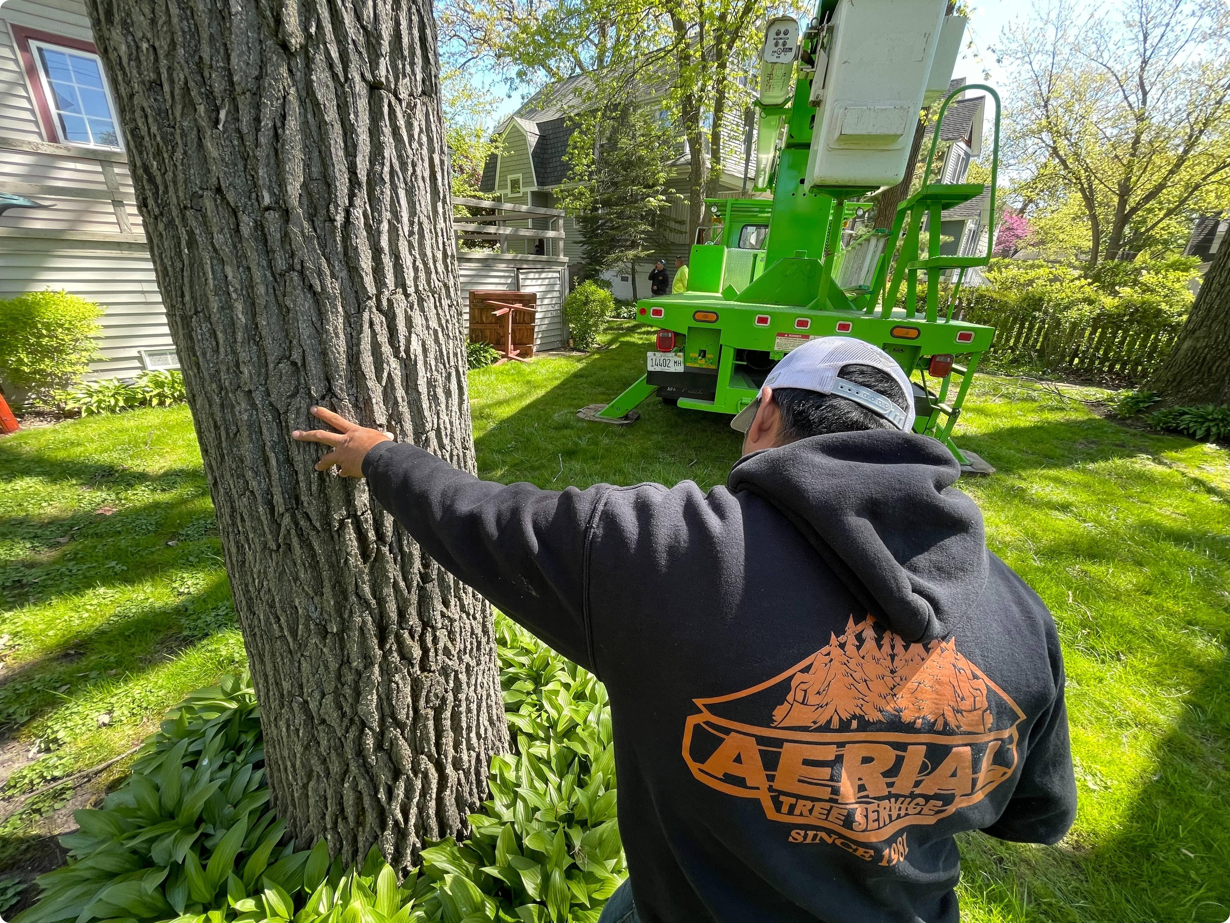 Tree Removal Deerfield