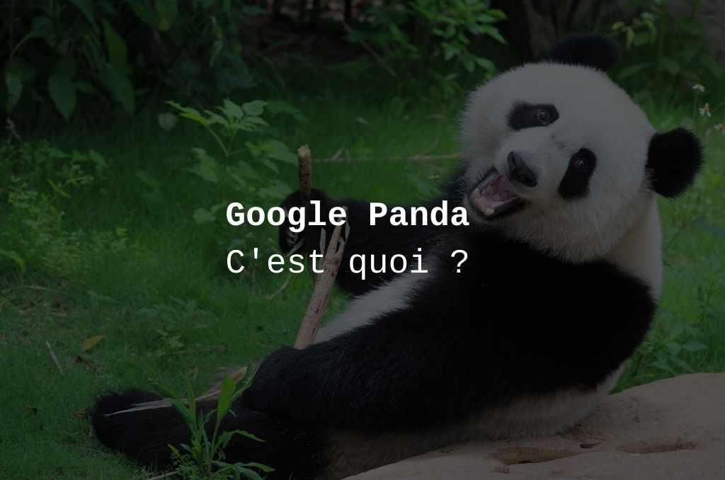 Google Panda : ce qu'il faut savoir
