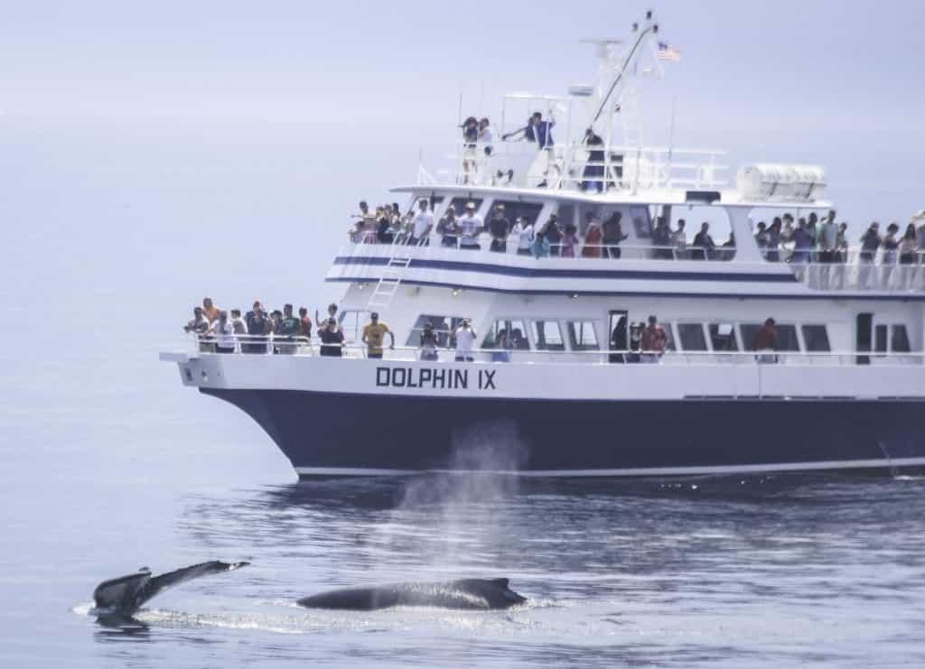 Dolphin Fleet Whale Watchers