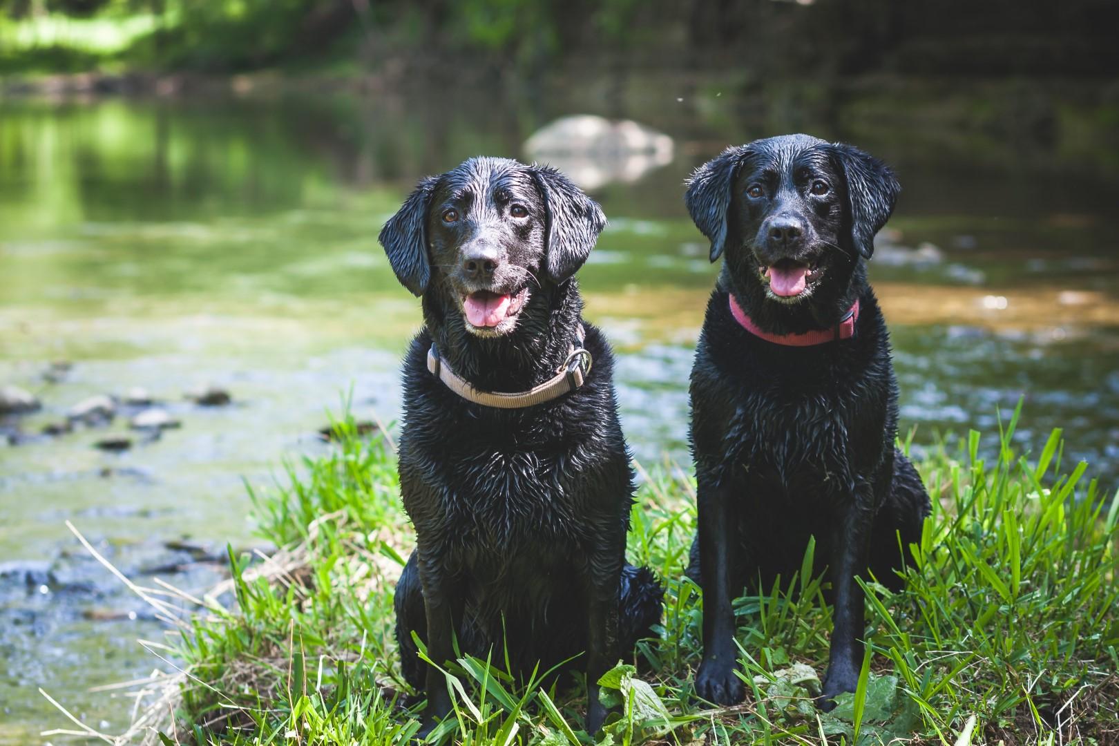 Dogs at Haslett Animal Hospital Veterinarian