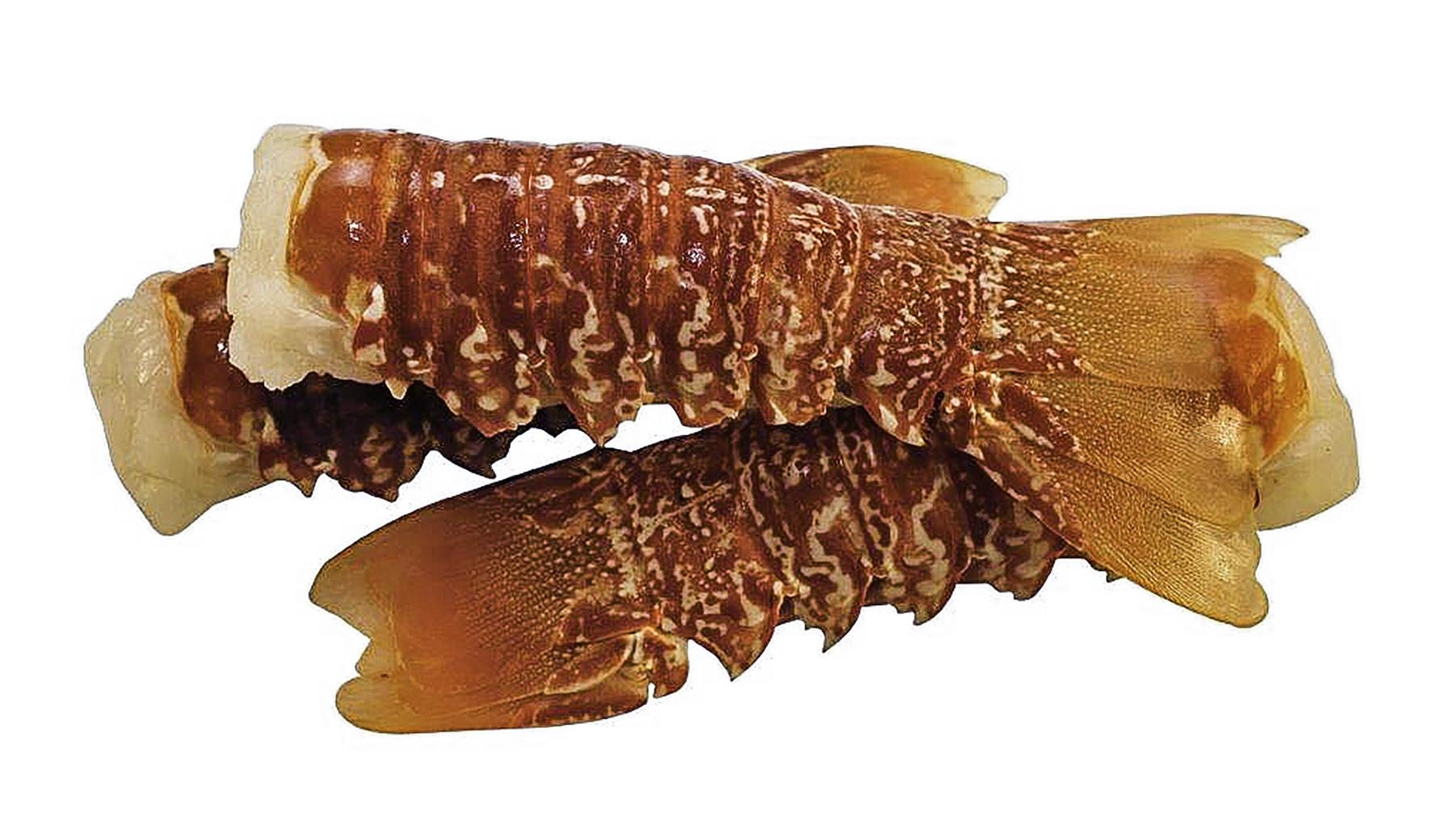 South Coast Rock Lobster