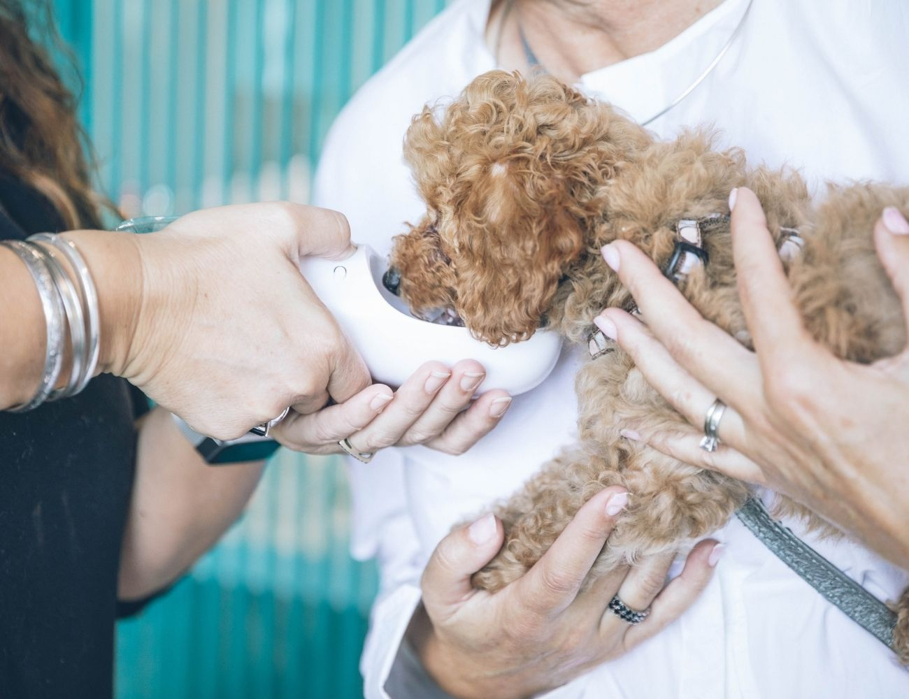 How Reviews Are Helping VidiVet Transform The Veterinary Industry
