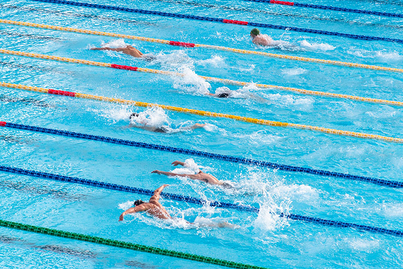 A row of athletic swimmers competing in the water