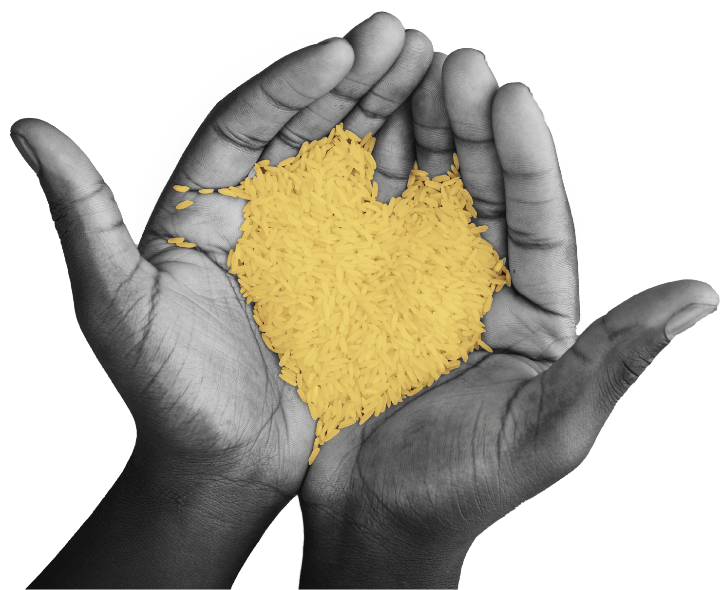 Hands holding yellow rice