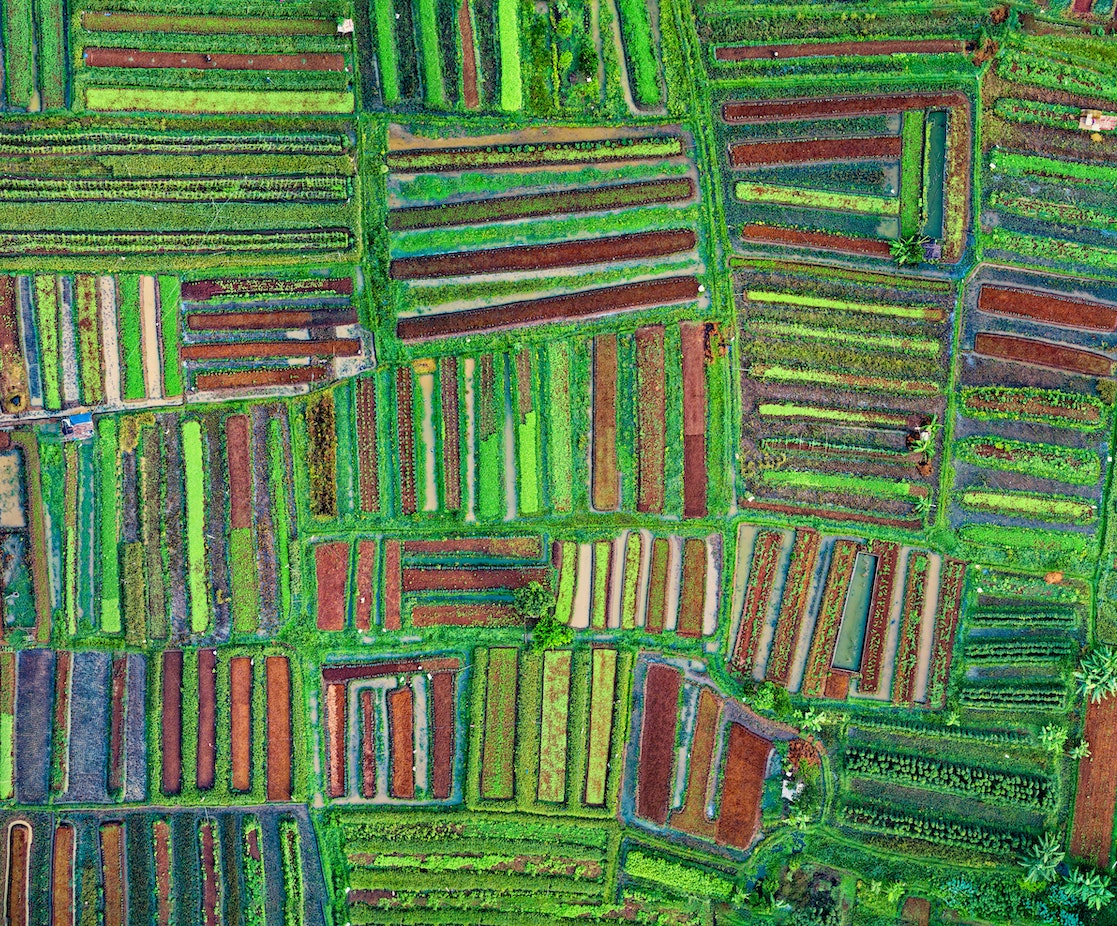 Aerial view of rows of crop fields