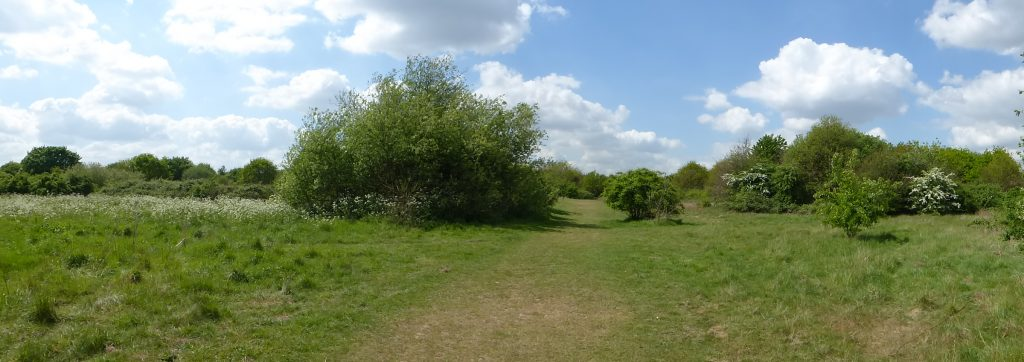 A walk around historic Hounslow Heath and an encounter with a very striking moth.
