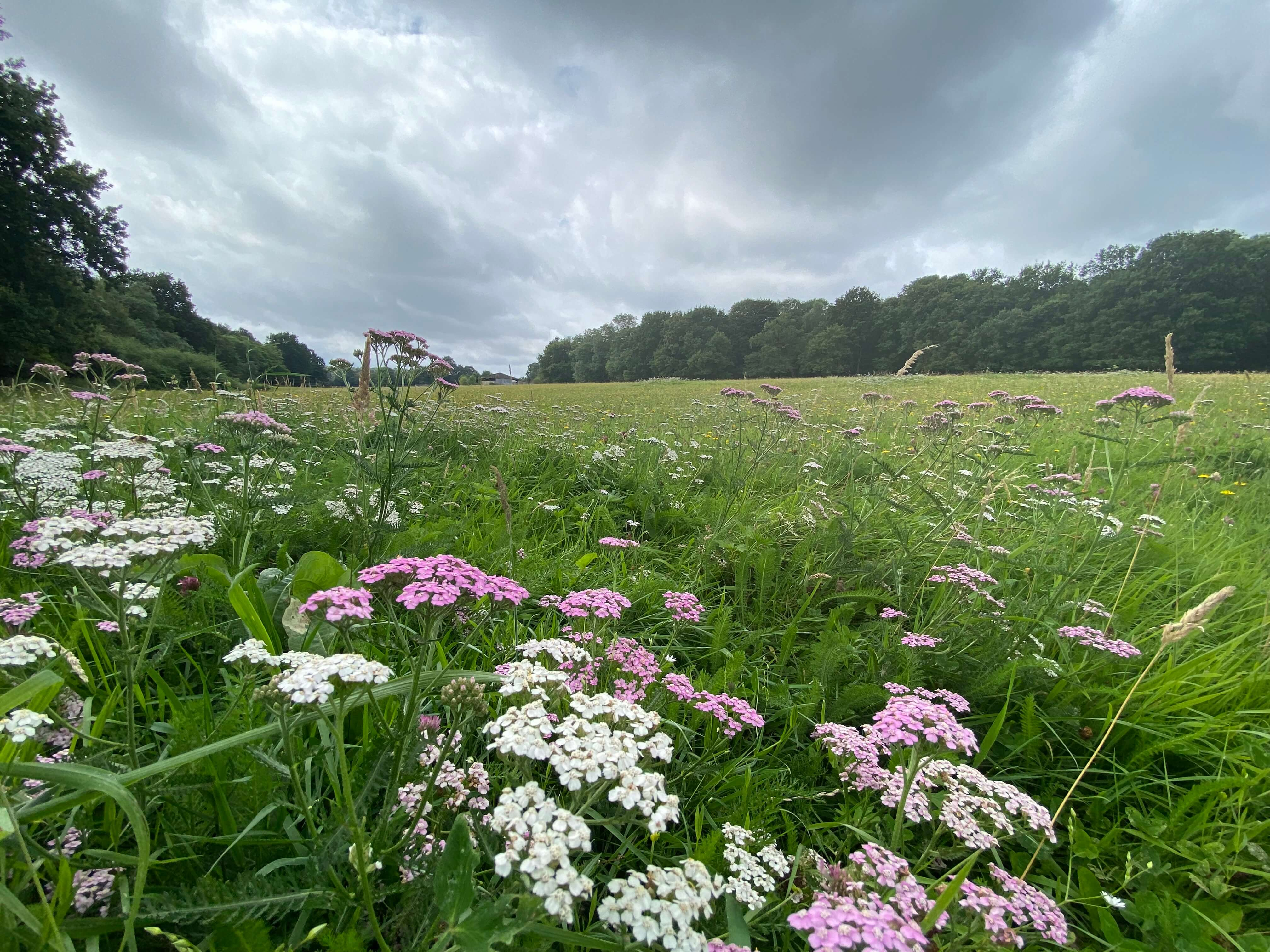An exploration of two of Bexley's best green spaces: Joyden's Wood and Foots Cray Meadows.