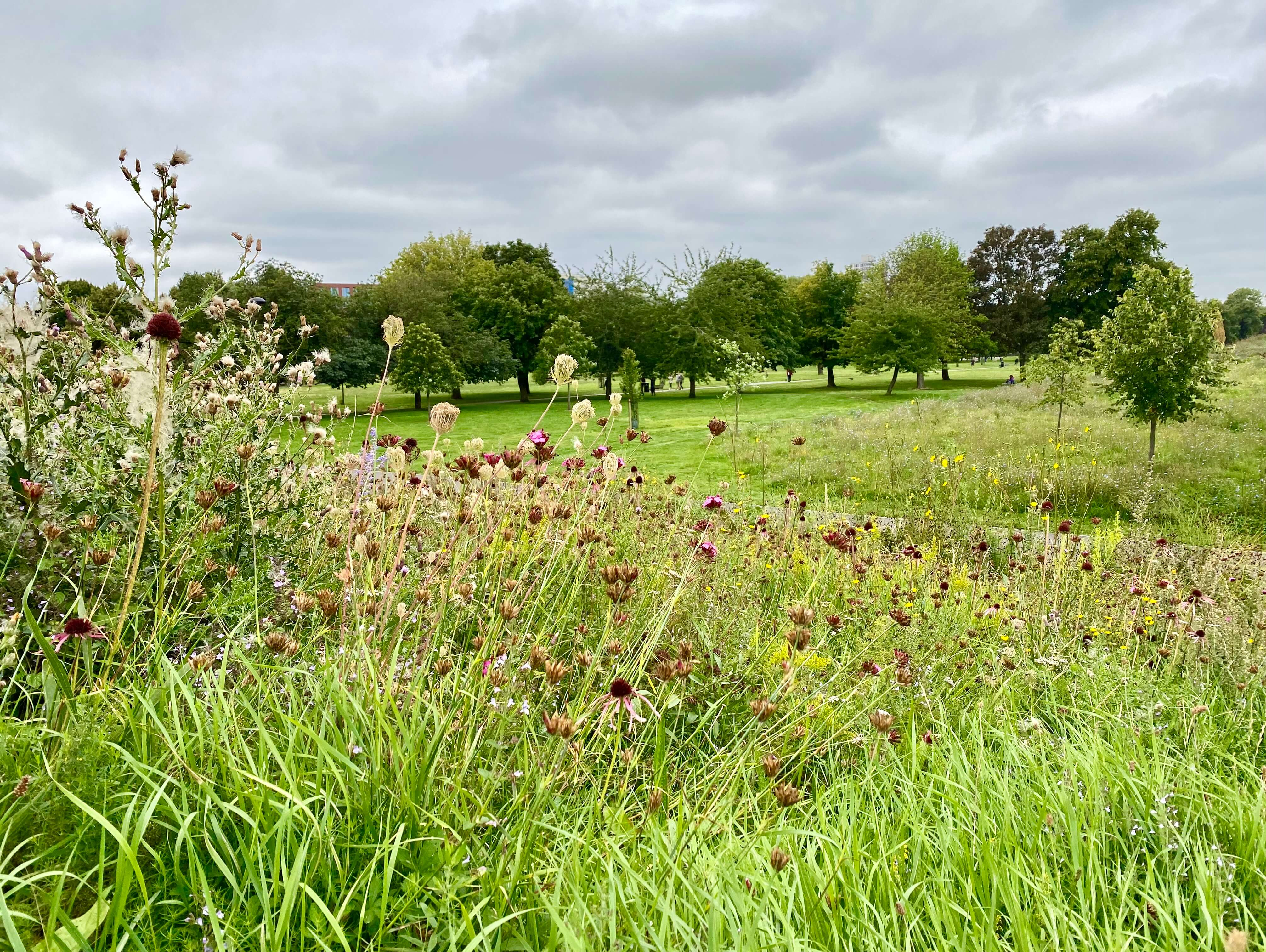 Exploring the largest park in Southwark, discovering its rich history and butterfly connections.