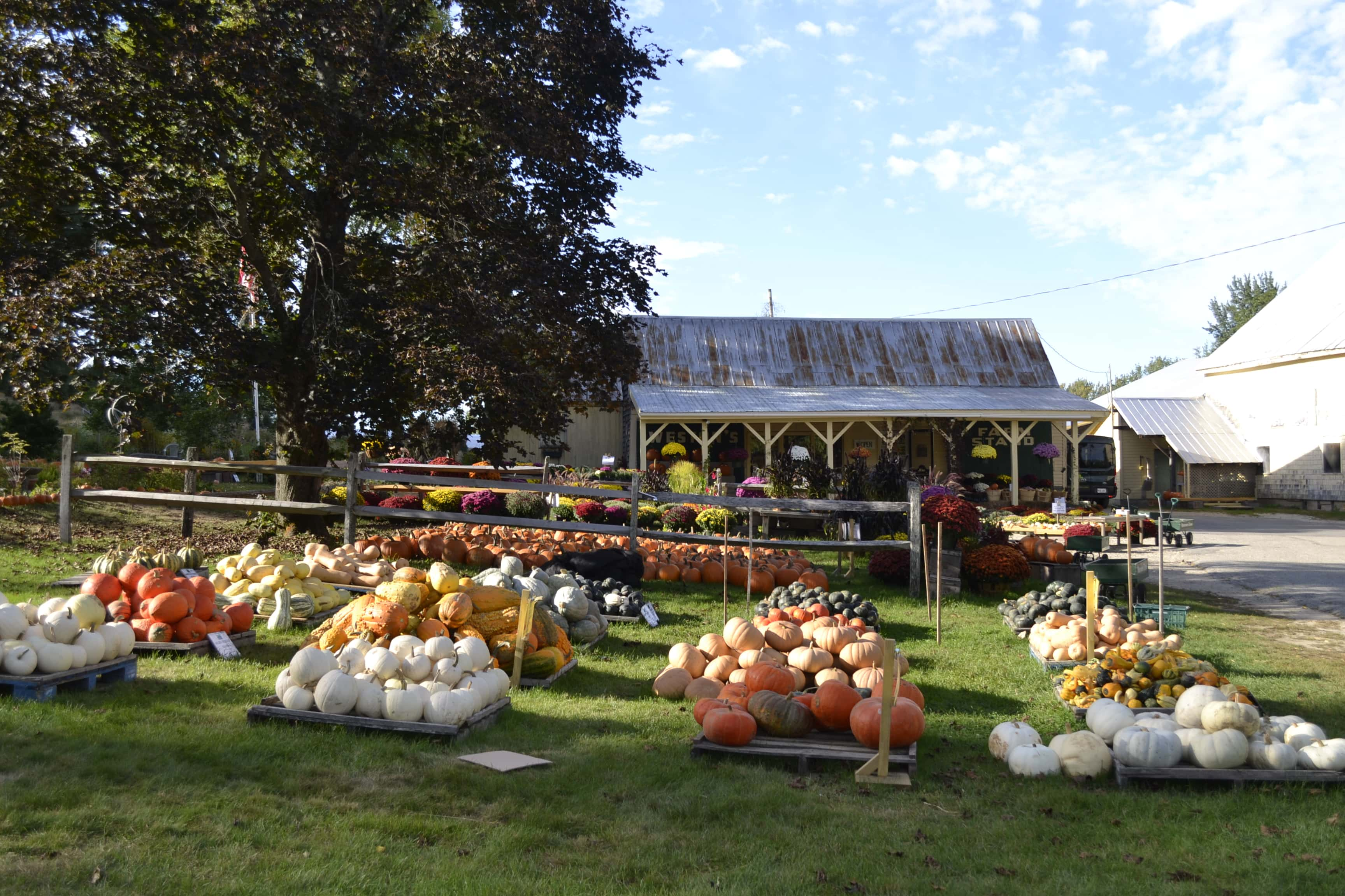 farm stands near North Conway, NH