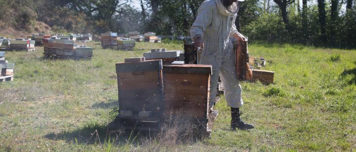 Apiculteur sortant un cadre d'une ruche - Cyrille Ruches Elevage