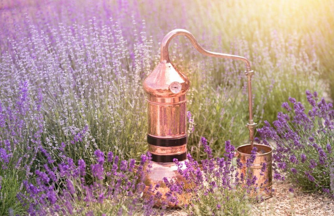Lavender Oil Demonstration