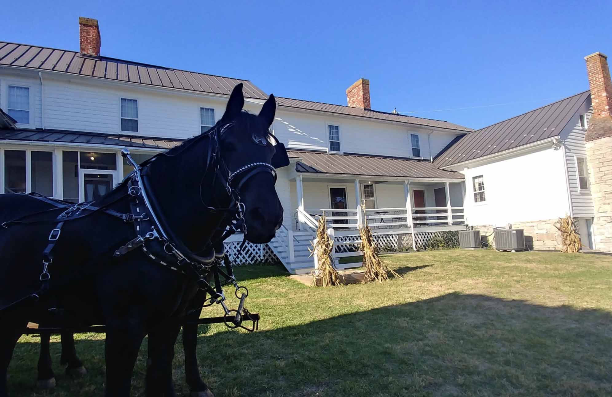 horse on wilderness road