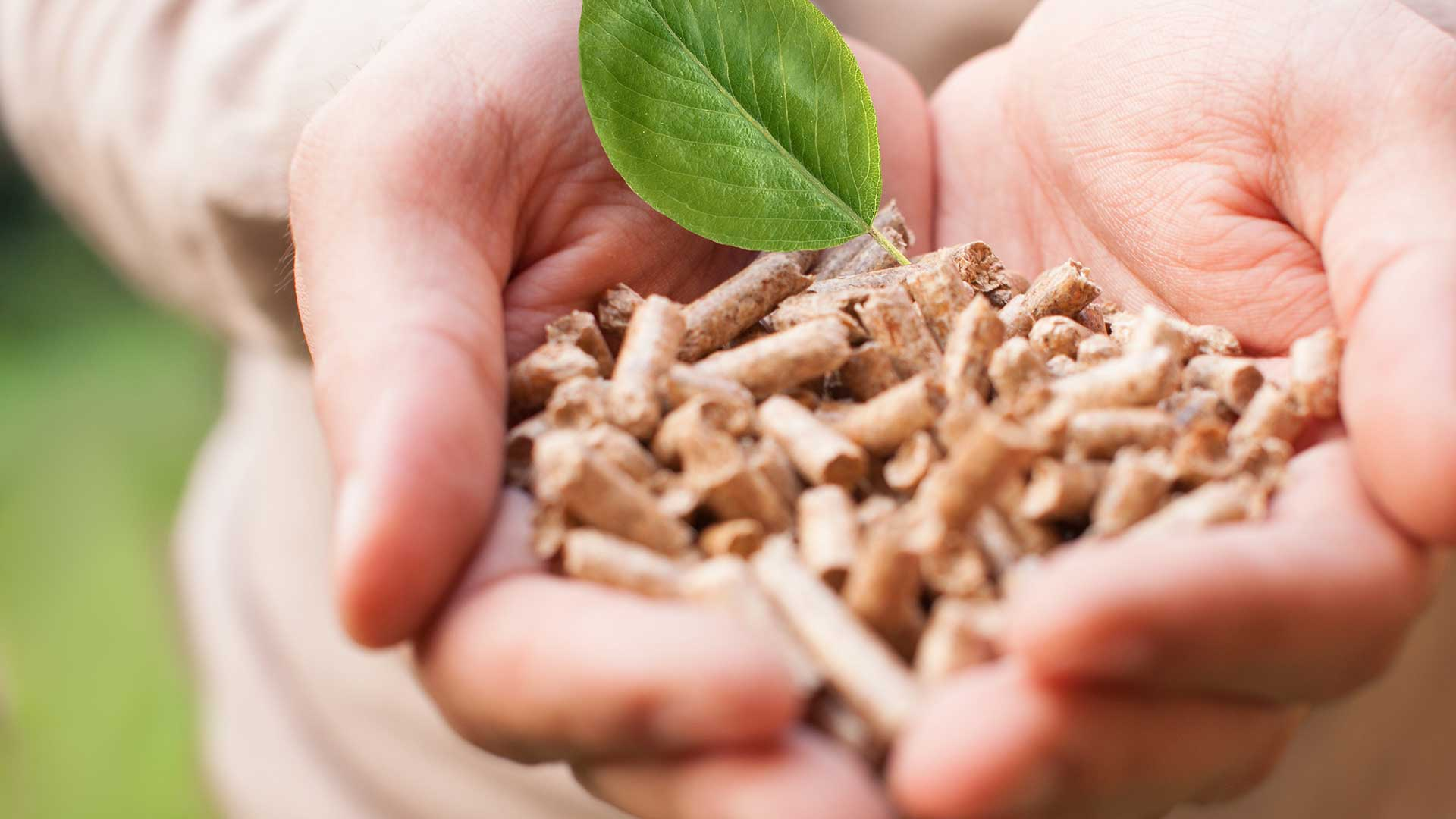 A pair of hands holding wood pellets
