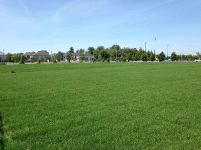 green grass on natural turf sports filed