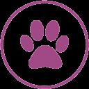 Característica césped artificial apto para mascotas