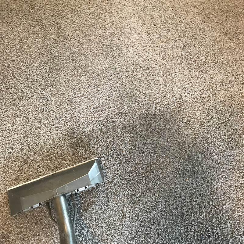 Carpet cleaning in progress in Medford