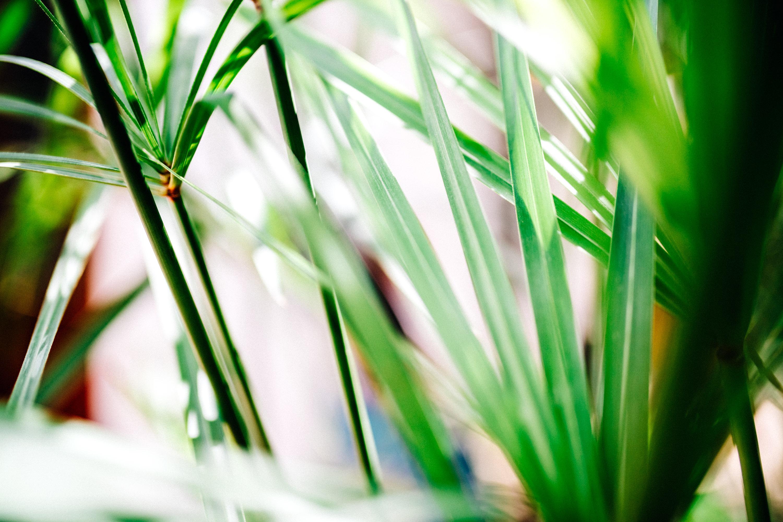 Tsitsikama Garden
