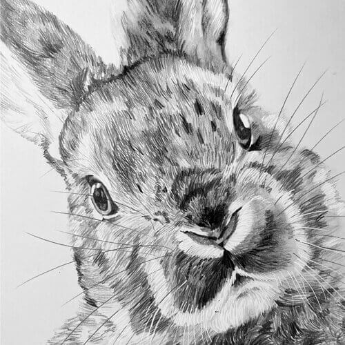 Grafiettekening van konijntje