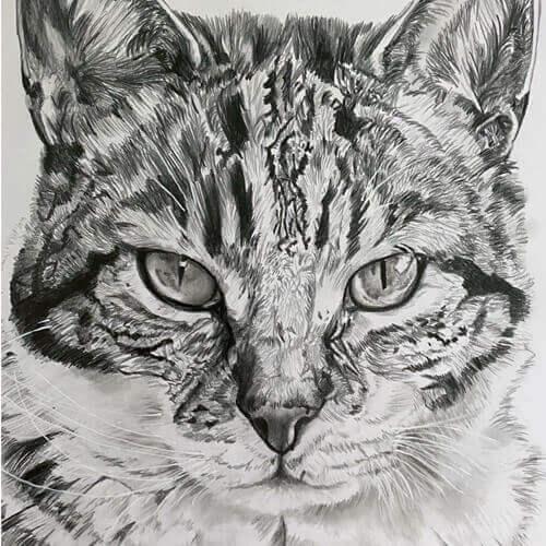 Grafiettekening van een kat op A4 formaat