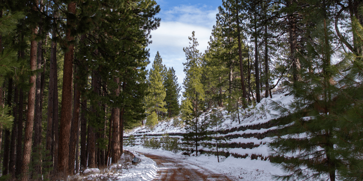 The Martis Creek Road cutting through the forest in Truckee with snow on the banks.