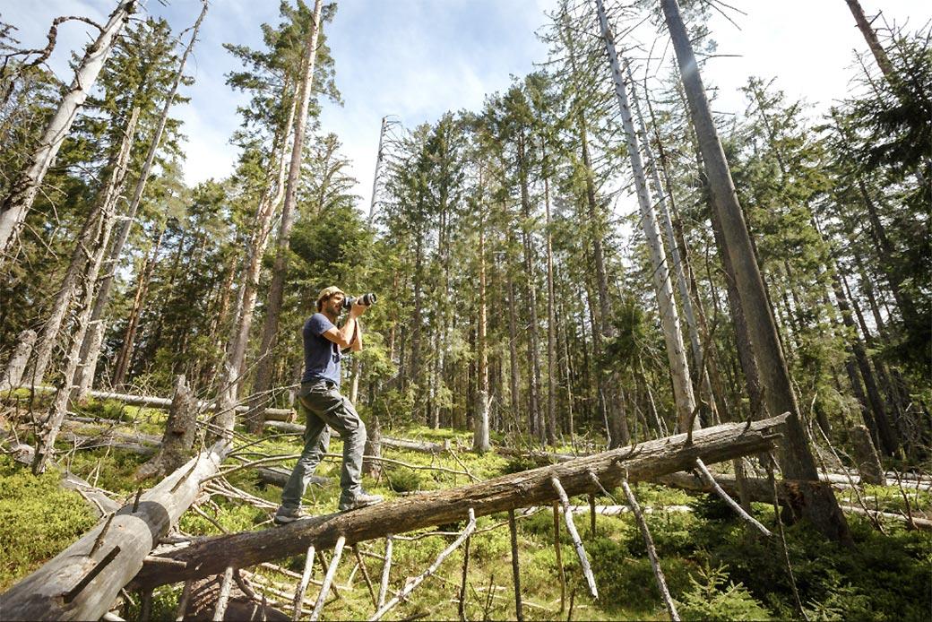 Fotograf beim Fotografieren im Schwarzwald