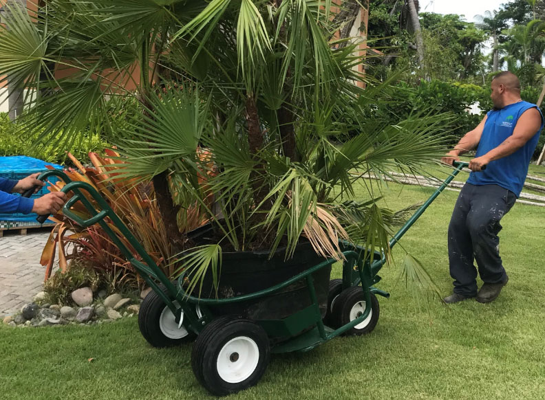 Photo of The Landscaper's Buddy, heavy duty cart, with tub attachment. One man pulling & one man pushing a huge tree fern.