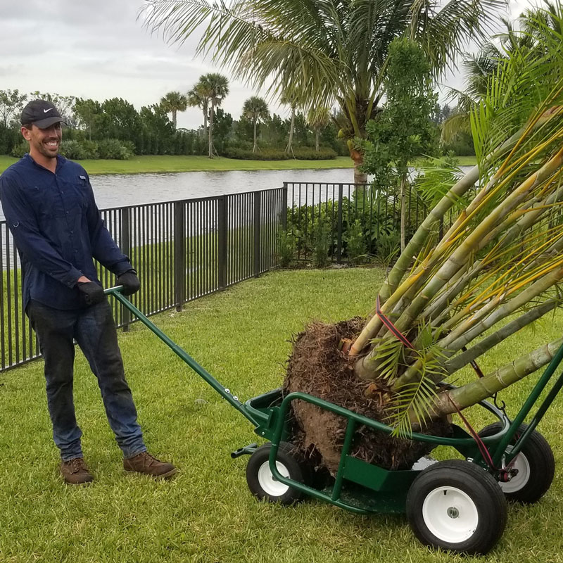 Man smiling while holding handle of The Landscaper's Buddy tree mover and heavy-load hauler, with a tropical tree ball inside the cart's cradle