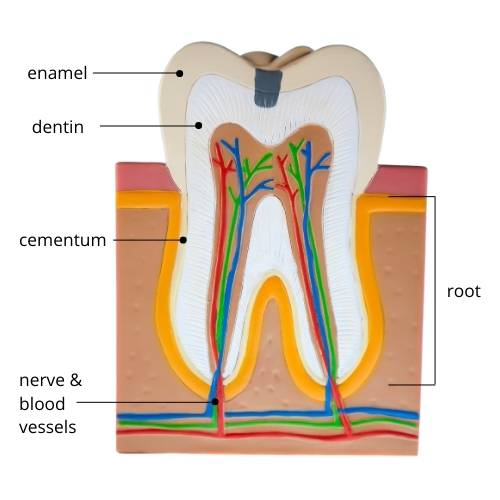 Why is My Tooth Sensitive to Cold or Hot?
