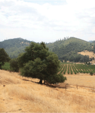 grassland image