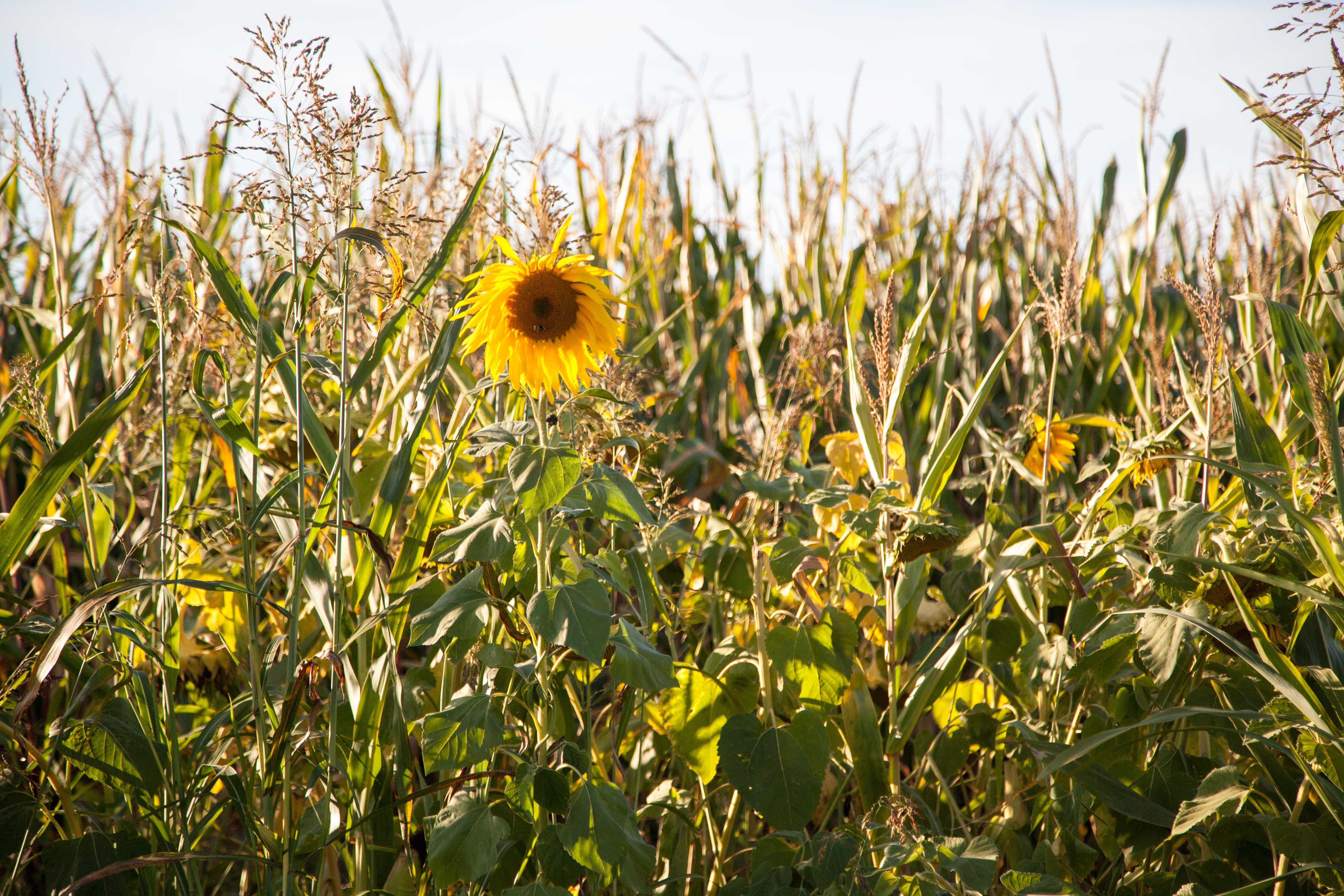 Le Bio, LA Bio, l'agroécologie, l'agriculture du vivant… Comment s'y retrouver ?