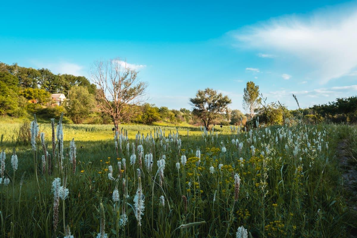 Le sol vivant, clé du débat sur les modes d'agriculture
