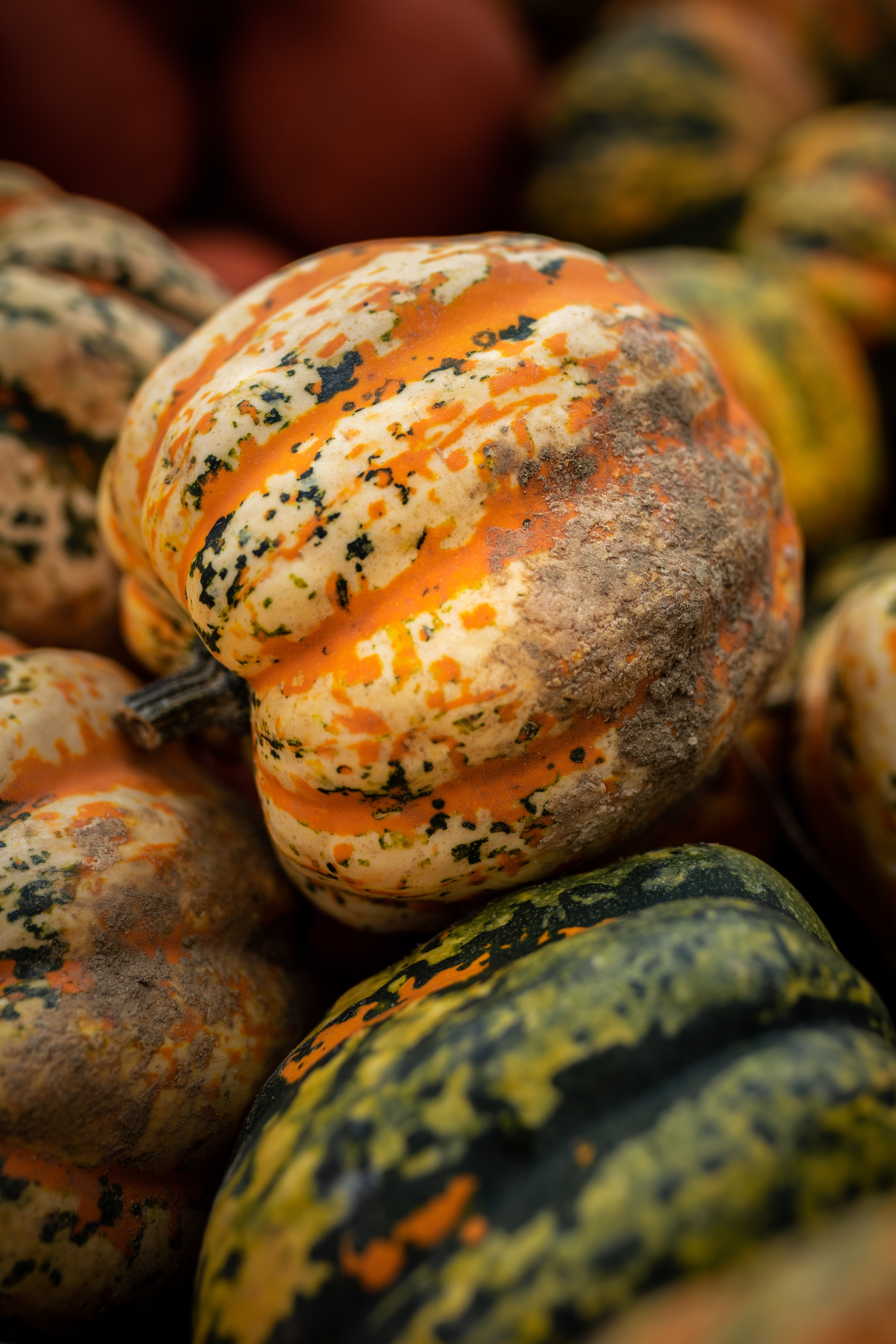 Pumpkins and Glow-worms Halloween Party