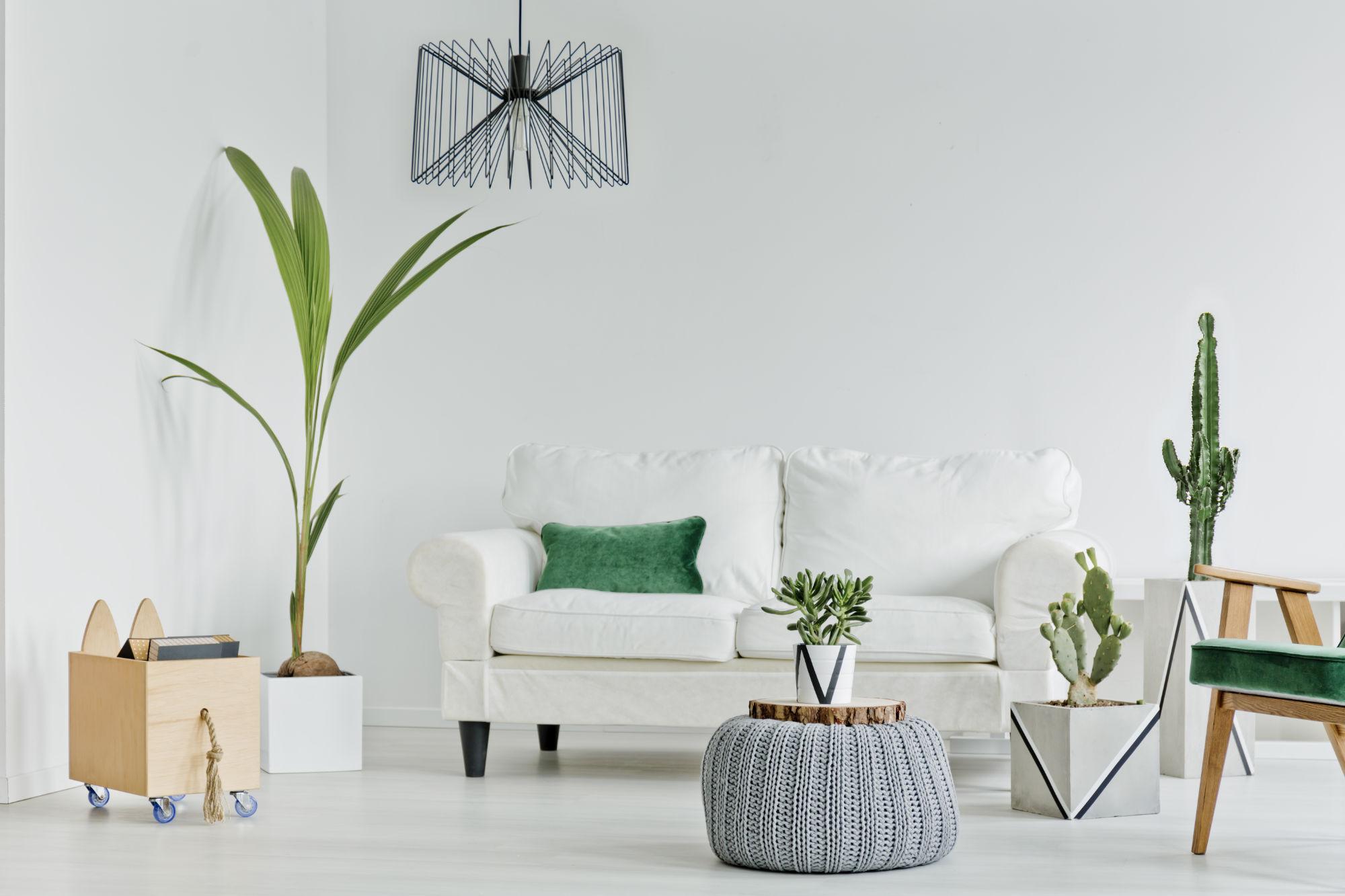 Air Mavericks - The Power of Plants