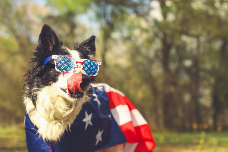 dog wearing sunglasses and American flag