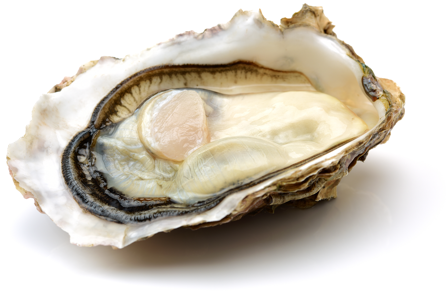 Oysters available in stock and pre-order at J.J. McDonnell & Co.