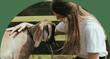Petting a goat