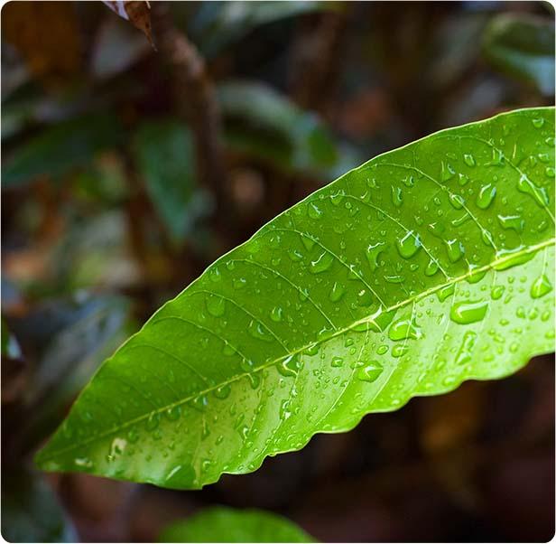 Rain Forest Storm
