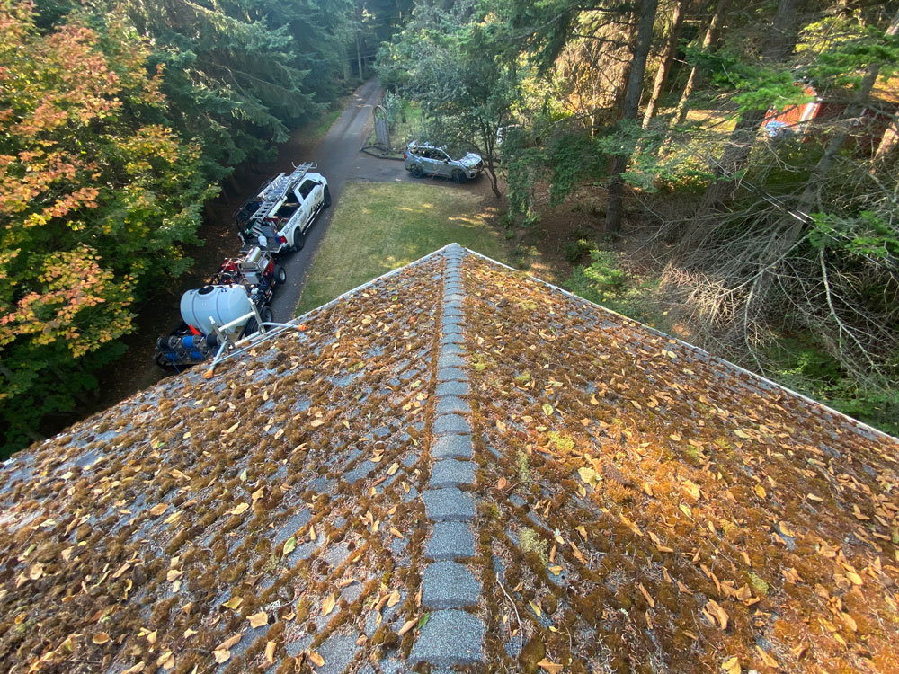 Roof with leaves and moss.